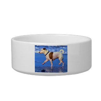 Jack Russell Terrier que corre en la playa Boles Para Gatos