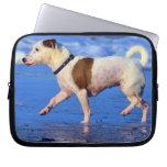 Jack Russell Terrier que corre en la playa Mangas Computadora