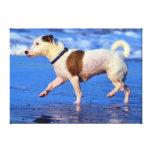 Jack Russell Terrier que corre en la playa Impresiones En Lona Estiradas