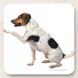 Jack Russell Terrier que levanta la pata Posavasos De Bebida