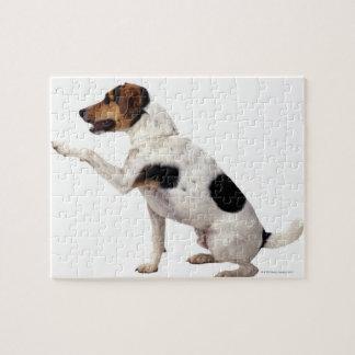 Jack Russell Terrier que levanta la pata Puzzle Con Fotos