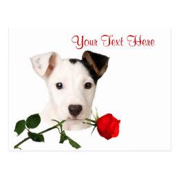 Jack Russell Terrier Red Rose Valentine Design Postcard
