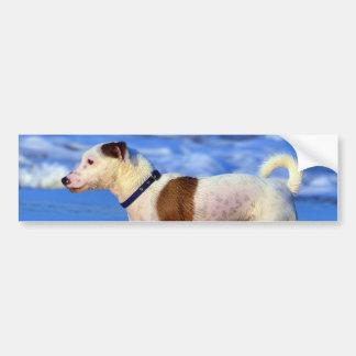 Jack Russell Terrier Running On The Beach Car Bumper Sticker