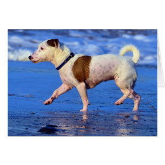 Jack Russell Terrier Running On The Beach Greeting Card