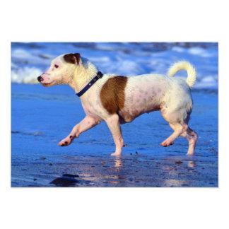 Jack Russell Terrier Running On The Beach Custom Invite