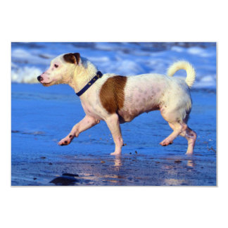 Jack Russell Terrier Running On The Beach 3.5x5 Paper Invitation Card