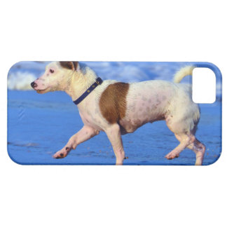 Jack Russell Terrier Running On The Beach iPhone SE/5/5s Case