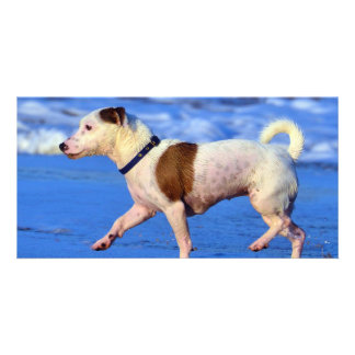 Jack Russell Terrier Running On The Beach Photo Card