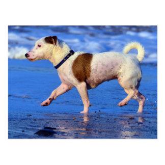 Jack Russell Terrier Running On The Beach Postcard