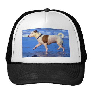 Jack Russell Terrier Running On The Beach Trucker Hat