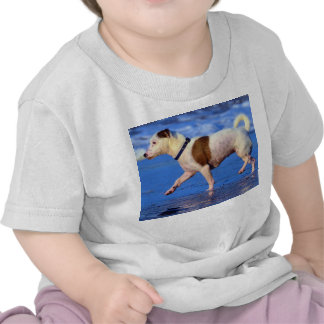 Jack Russell Terrier Running On The Beach T Shirts