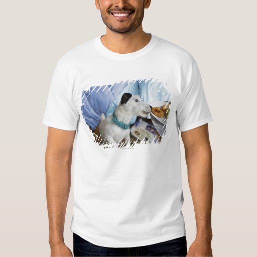 Jack russell terrier. shirts
