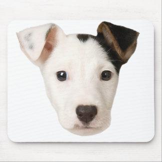 Jack Russell Terrier Alfombrillas De Ratón
