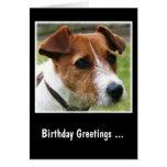 Jack Russell Terrier Tarjeta