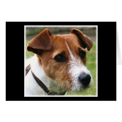 Jack Russell Terrier Tarjeta De Felicitación