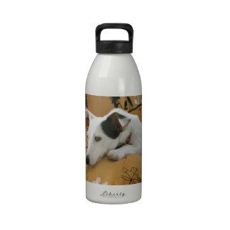Jack Russell Terrier Water Bottles