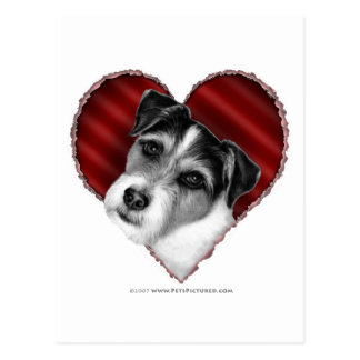 Jack Russell Terrier with Heart Postcard