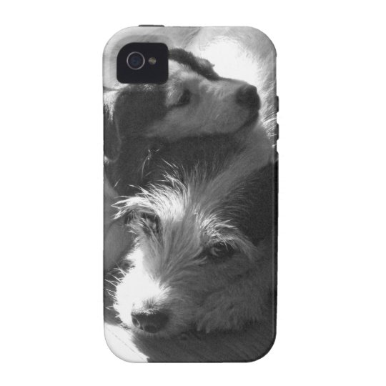 Jack Russell Terriers nap together in the sun iPhone 4 Case