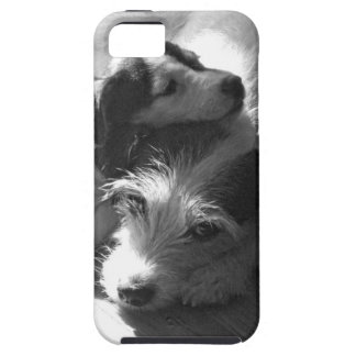 Jack Russell Terriers nap together in the sun iPhone SE/5/5s Case