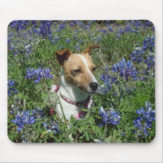 Jack Russell Terrior Mouse Pad