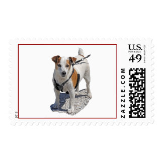 Jack Russell US Stamp