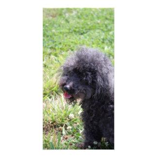 Jack T Poodle Customized Photo Card