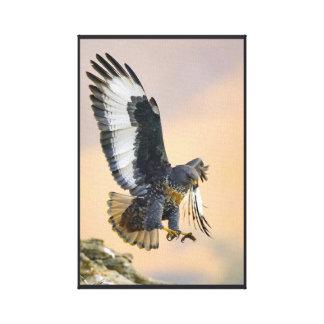 Jackal Buzzard Canvas Print