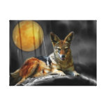 Jackal by moonlight gallery wrapped canvas