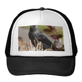 jackdaw2.jpg trucker hat