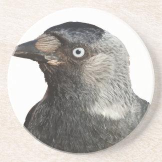 Jackdaw Bird Portrait Vector Coaster
