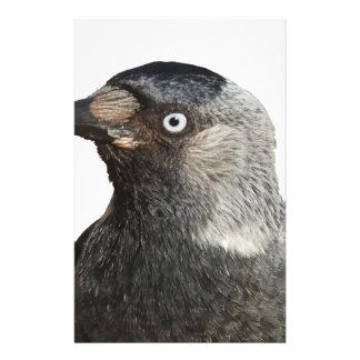 Jackdaw Bird Portrait Vector Stationery