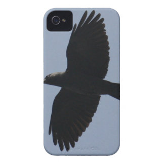 Jackdaw In Flight iPhone 4 Cover