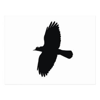Jackdaw In Flight Silhouette Postcard