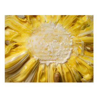 Jackfruit soleado postales