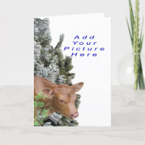 Jacki&PineTree-Customize-Add a picture Holiday Card