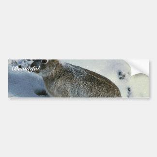 Jackrabbit Blanco-atado Etiqueta De Parachoque