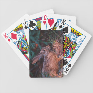 Jackrabbit de cola negra baraja cartas de poker