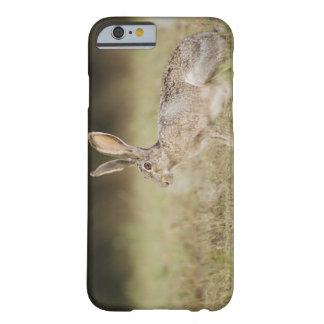Jackrabbit de cola negra, californicus del Lepus, Funda Para iPhone 6 Barely There