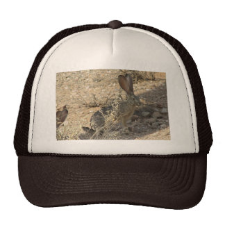 Jackrabbit de cola negra gorro