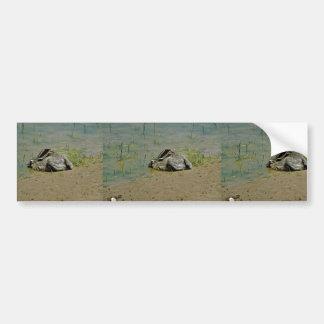 Jackrabbit en agua etiqueta de parachoque