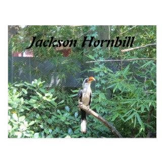 Jackson Hornbill Postcard