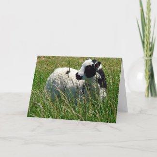 Jacob Ram Lamb card