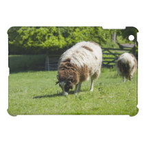 Jacob Sheep Grazing Photograph iPad Mini Covers