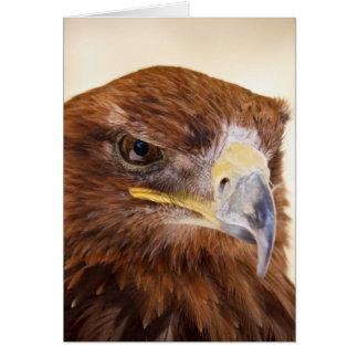 Jacob the Harris Hawk Card