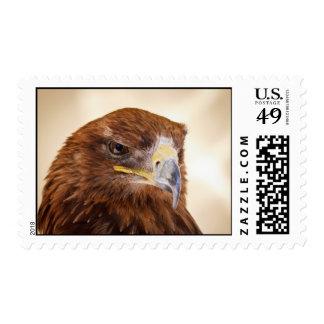 Jacob the Harris Hawk Stamp