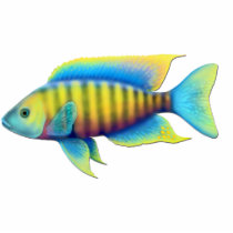 Jacobfreibergi African Peacock Cichlid Fish Pin Statuette