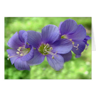 Jacobs Ladder Blossoms Greeting Card