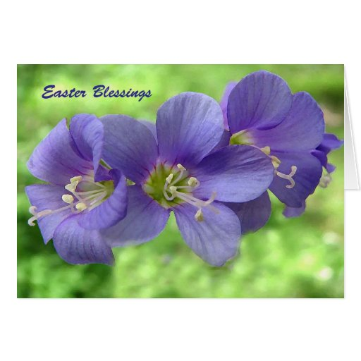 Jacob's Ladder Blossoms Easter Greeting Cards
