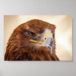 Jacon the Harris Hawk poster