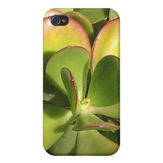 Jade Plant iPhone Case